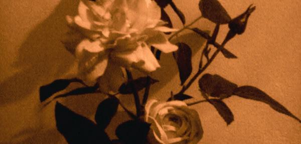 Rose-di-Carta.jpg